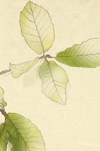presa-hojas