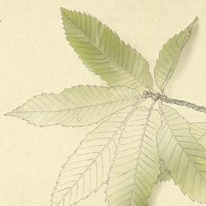 rapada-hojas